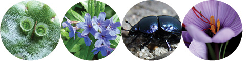Nachmittag der Artenvielfalt